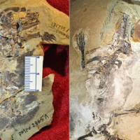 Fossils of the earliest-known arboreal and subterranean mammals